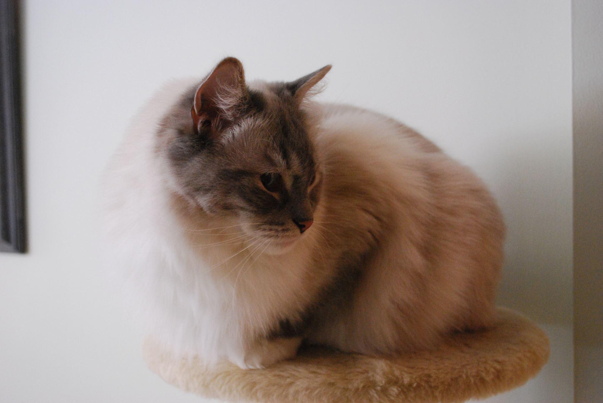 Cherlys Cat